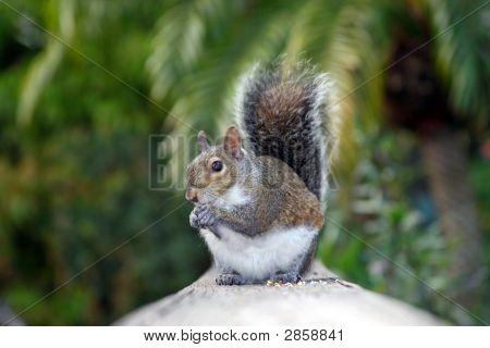 Squirrel Sitting On Fence