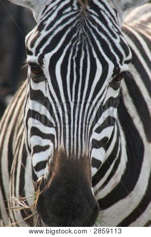 Zebra Faces http://www.bigstockphoto.com/image-2859113/stock-photo-zebra-face