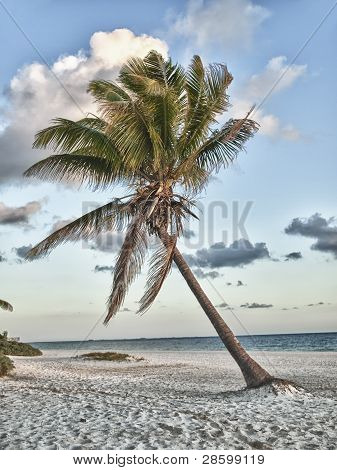 Caribbean Ocean And Palm Trees In Mexico