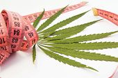 Marijuana And Weight Loss. Two Green Leaf Of Marijuana, Hemp Or Cannabis Entwined With Measuring Tap poster