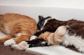 Two Cats, Red And Black And White, Are Lying Peacefully On A Warm Radiator, Huddling Together. The C poster