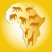Wild Animals In Africa poster