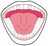 VECTOR - Opened Mouth Showing the Teeth, Tongue, Tonsils - Can be useful in Schools & Clinics - You