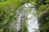 stock photo of minos  - Water fall at the Mino Quasi National Park in Japan with green maple tree - JPG