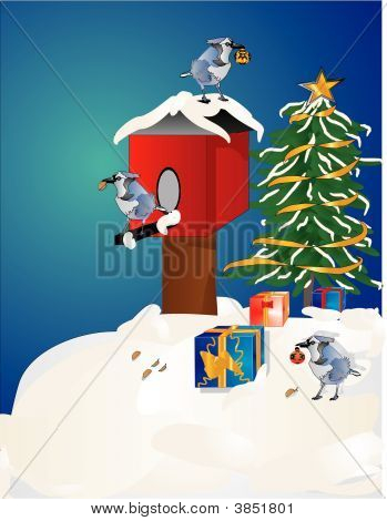 Blue Jays And Birdhouse Around Xmas