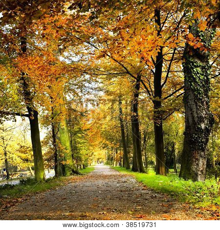 Lane In Park With Beech Trees In Fall Colors
