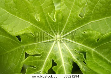 Green Leaf For Backgrounds