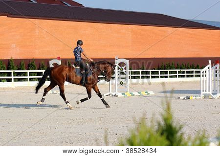 Training Show-jumping