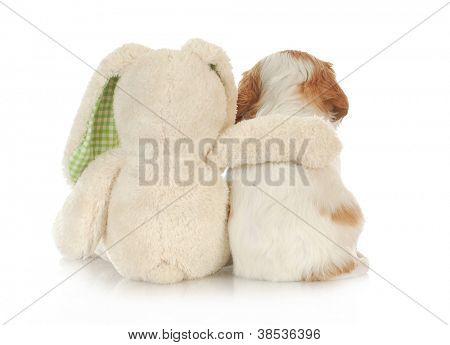 best friends - stuffed rabbit with arm around cavalier king charles spaniel puppy on white background