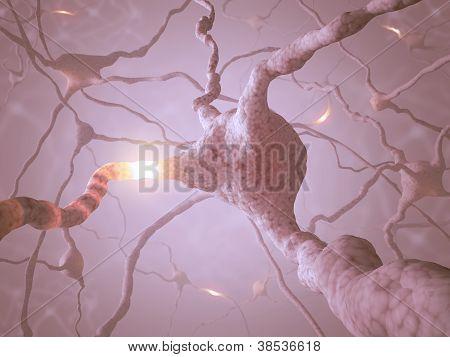 Neuron-Konzept