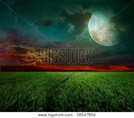 young wheat field at night with the moonlight