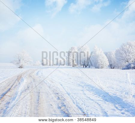 Frozen trees and road in a field