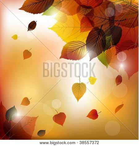 Autumn vector leafs background- fall illustration with back light