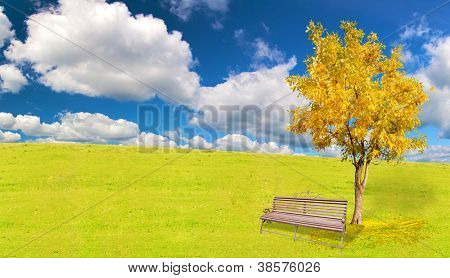golden autumn tree and bench under blue sky with clouds