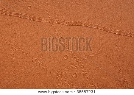 Insect tracks in the sand dunes of Erg Chebbi in the Sahara Desert, Morocco.