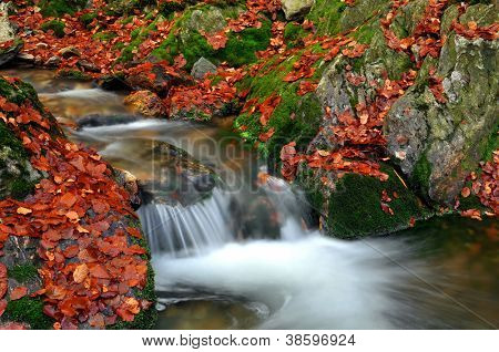 autumn creek in the national park Sumava, Czech Republic