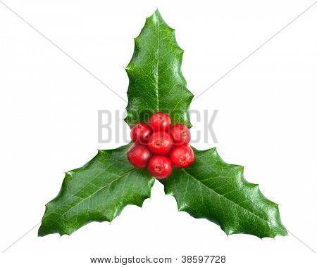 Weihnachtsdekoration. Stechpalme mit Beeren auf dem weißen Hintergrund