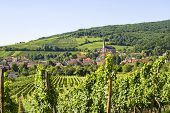 Andlau (alsace) - Vineyards