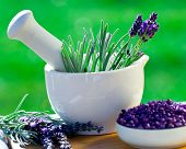 Fresh lavender herbs in the mortar - alternative medicine, healthy cosmetics concept