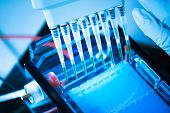 stock photo of electrophoresis  - loading amplified DNA samples to agarose gel with multichannel pipette - JPG