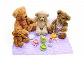 foto of teddy-bear  - Shot of a teddy bears picnic on white background - JPG