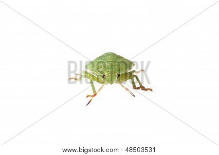 Green Bug Isolated