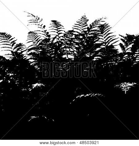 Abstract background with leaves silhouette of fern, black and white vector illustration