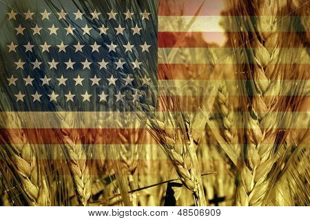 American Agriculture