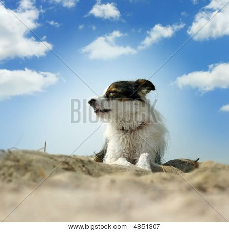 Photo Of Dog On A Sand Under Blue Sky