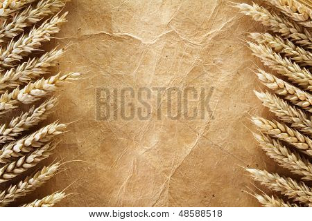 wheat on old paper background
