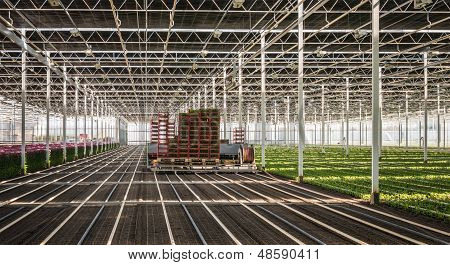 Fully Automatic Transplanter In A Greenhouse