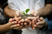 stock photo of farmer  - Hands of farmers family holding a young plant in hands - JPG