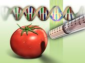 stock photo of genetic engineering  - Genetically modified tomato and dna sequence - JPG