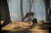 foto of deer horn  - young deer posing in the forest netherlands