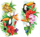 image of toucan  - Tropical flowers - JPG