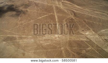 Nazca Lines - Pelican