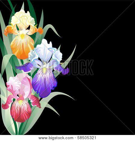 Black holidays card with Iris flowers