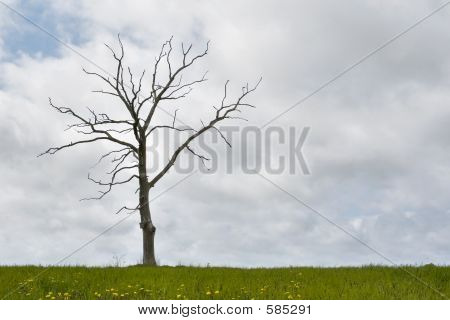 Single Dry Tree