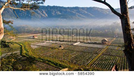 Morning Village
