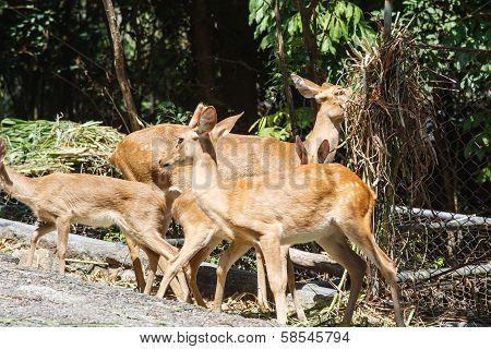 Group Of Deer At Zoo