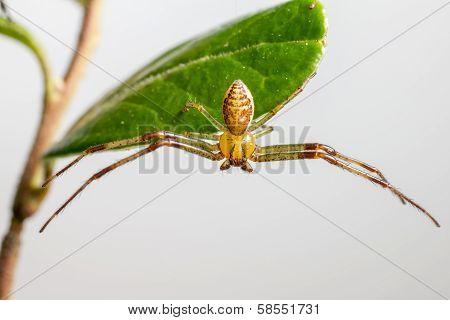 Portrait of a crab spider