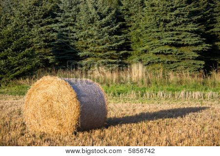 Harvested Bale Of Hay In A Field