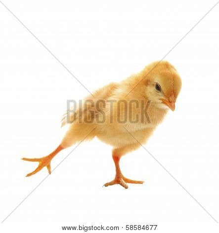 Little Yellow Young Baby Chick Excercise Yoka Isolated On White Background