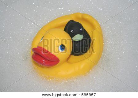 Yellow & Black Ducks