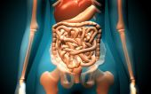 image of excretory  - Digital illustration of human digestive system in colour background - JPG