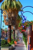 image of snowbird  - Downtown Palm Springs - JPG