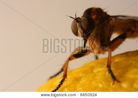 Fly On Lemon