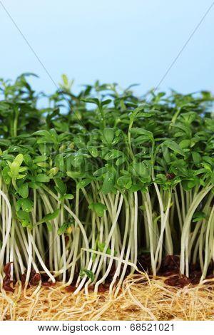 Fresh cress salad on blue background