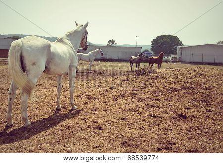 Back shot of white horse with few horses