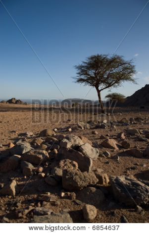 Dry Desert And Tree